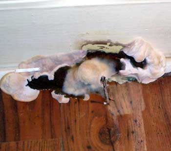 Dry Rot Treatment Specialist – How to Find the Best in Ireland