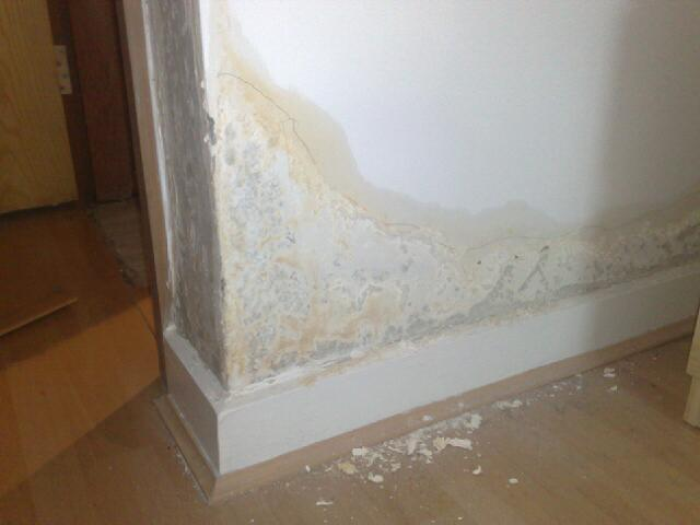 Damp Proofing – What Are the Different Types of Damp?
